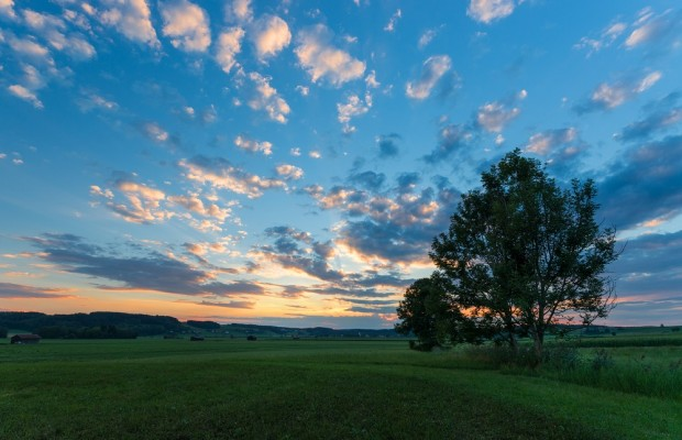 Green Meadow Landscape at Sunset